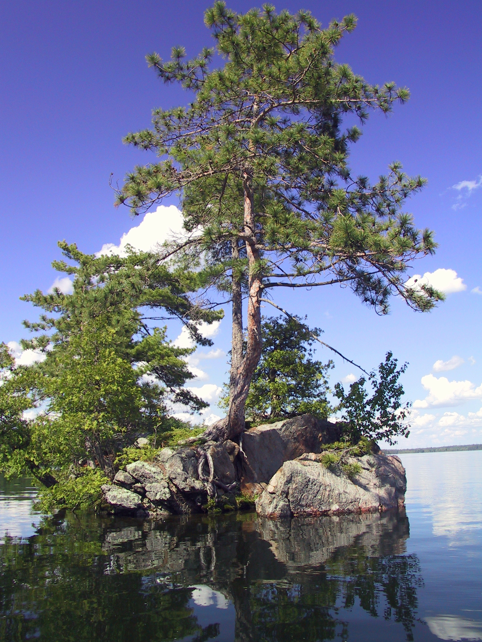 Image of a Tree in the water.